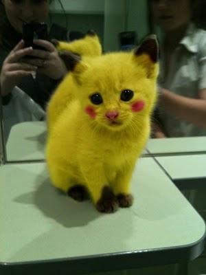 Gambar Pikachu,picture real pikachu