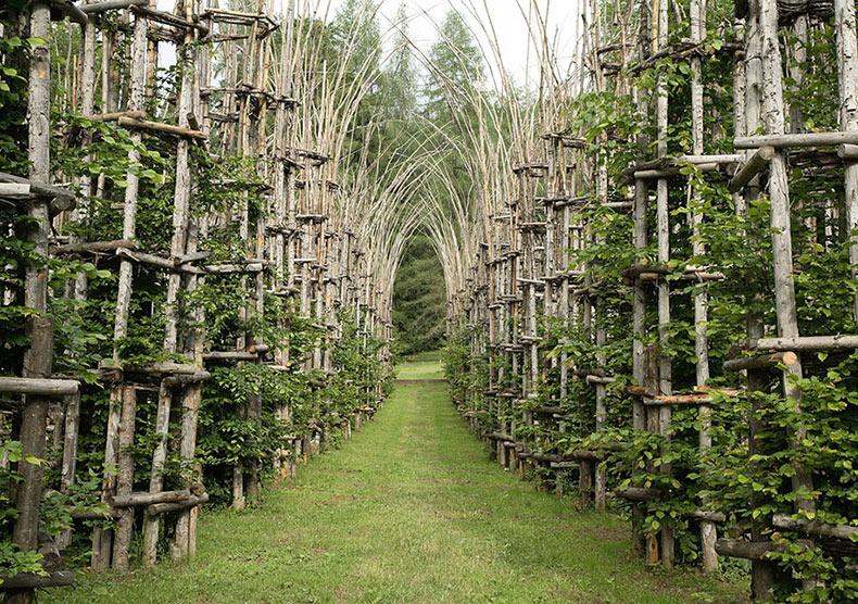 Magnífica catedral en Italia formado por cultivo de árboles reales