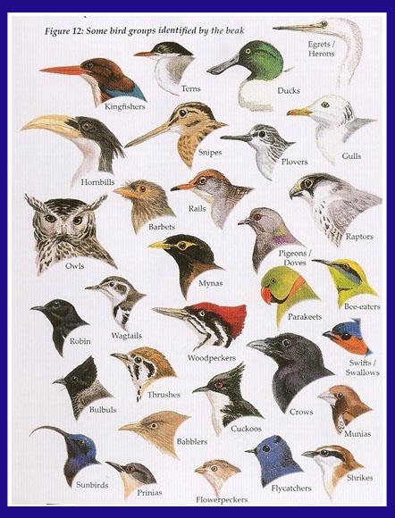 FOREST BIRD: The Bird-... Different Kinds Of Birds