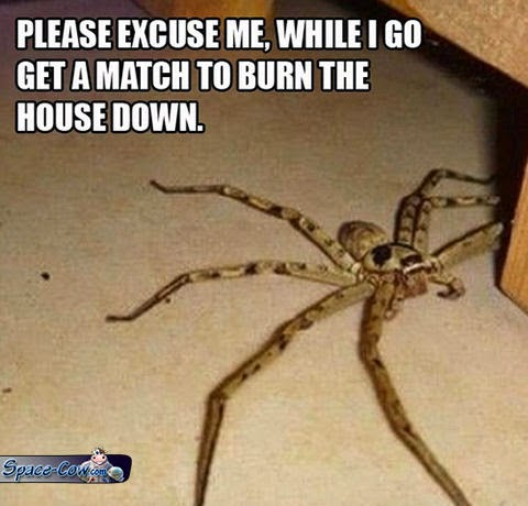funny spider picture humor