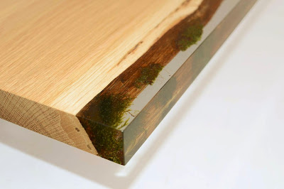 closeup of undergrowth edge with moss encapsulated in resin