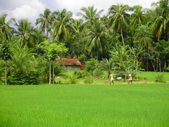Village Life Style About Bangali Life Style