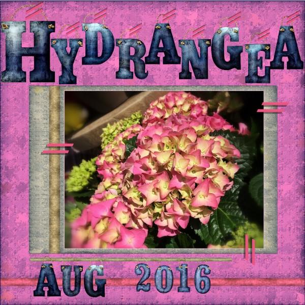 Aug - 2016 - H = Hydrangea