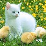 Blog de gatitos