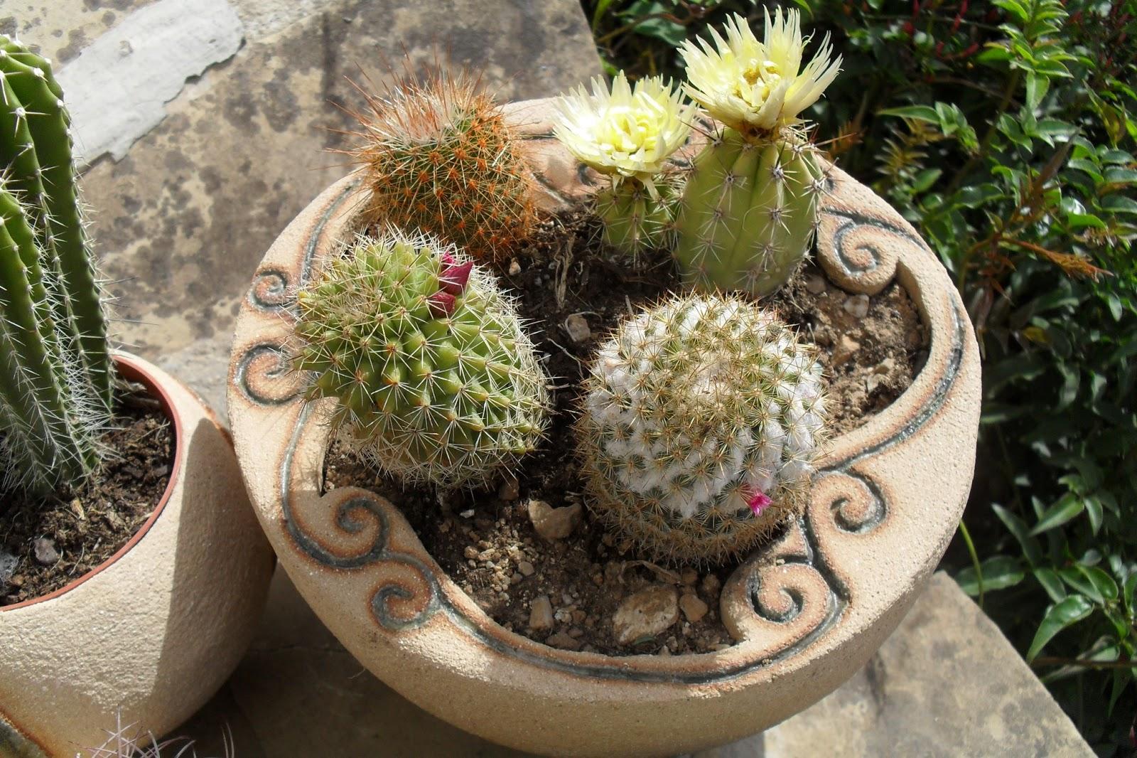 Blog de artesania caracolyperejil macetas para cactus for Donde venden cactus