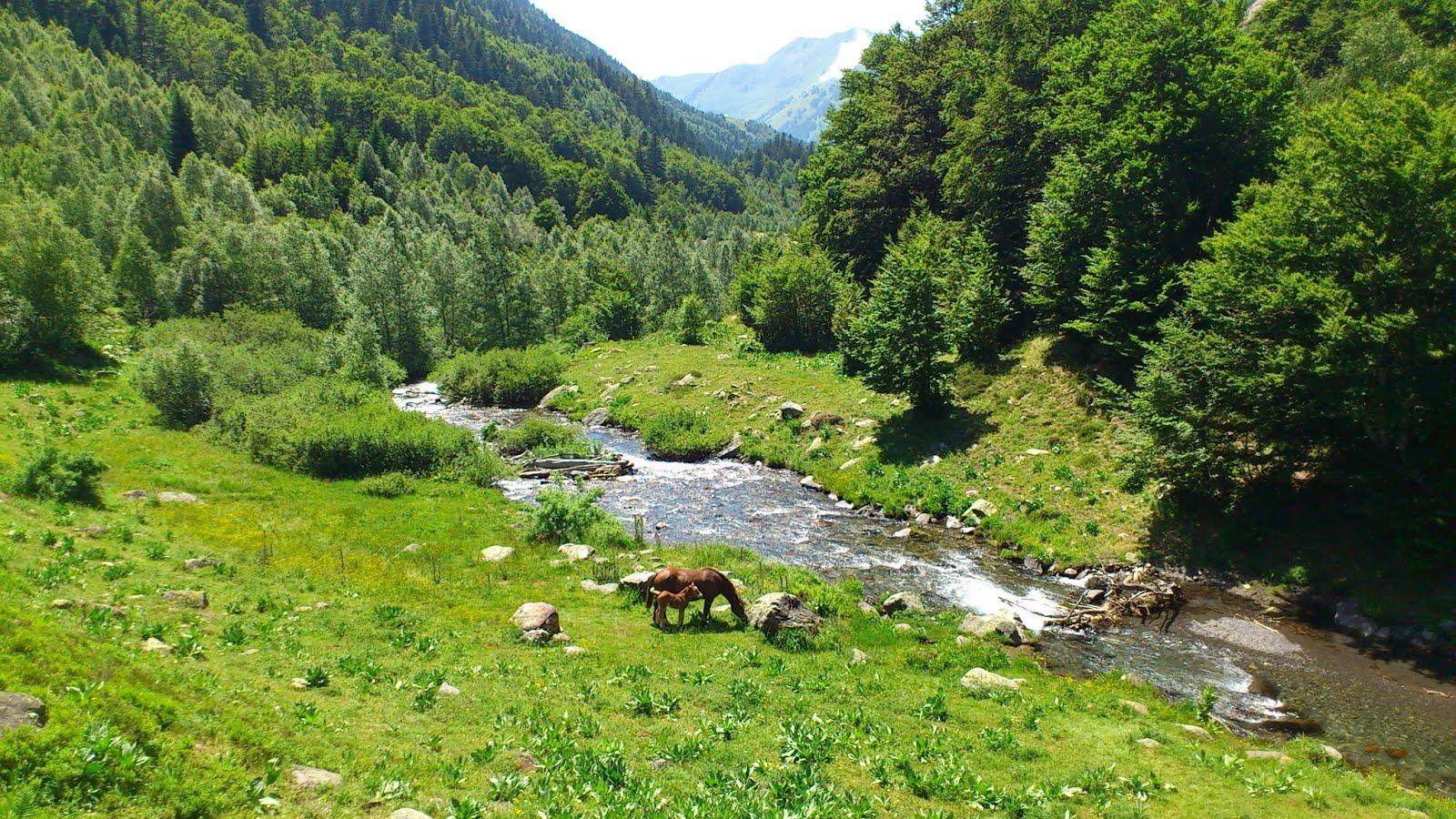 Caballos junto al río
