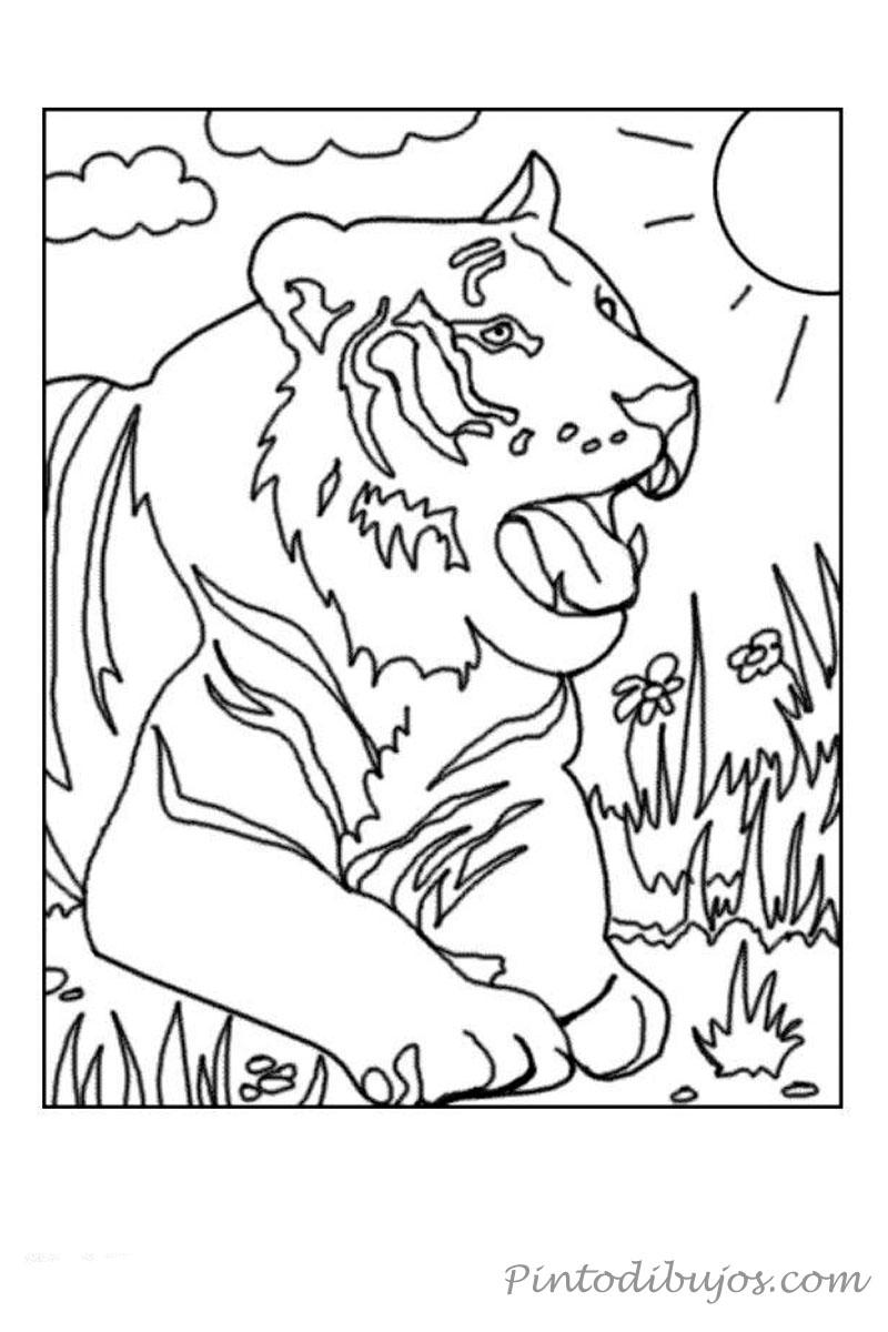 Tigre para colorear | Tigre para colorear