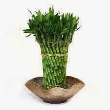 perawatan alami natural udara dalam rumah tanaman hias