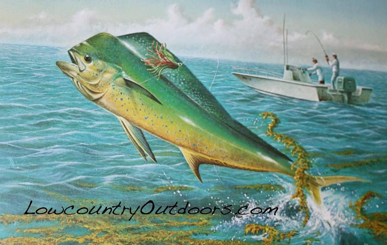 Lowcountry outdoors lowcountry saltwater fishing report for Sc saltwater fish