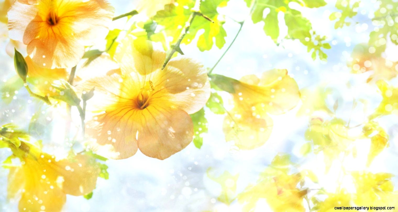 46 Free Modern Yellow Flowers Wallpapers