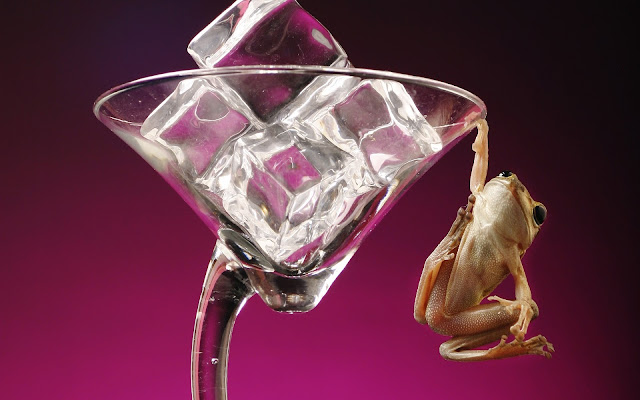 Best Jungle Life frog, ice cubes wallpaper, ice cubes, glass