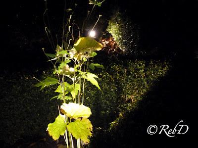"""växter upplysta av strålkastare, ljusinstallation från """"Eslöv lyser"""" 2011. foto: Reb Dutius"""