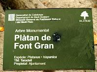 Placa d'arbre monumental del Plàtan de la Font Gran de Taradell