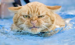 Gato detesta água - expressão evidente