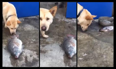 Cute dog allegedly saving some fish