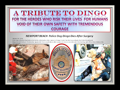 "A TRIBUTE TO ""DINGO"" NEWPORT BEACH POLICE DOG"
