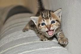 Baby cat meows