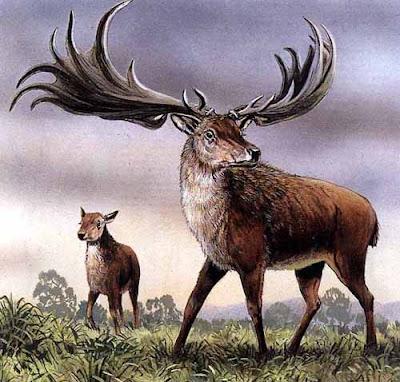 pleistocene fauna Megaloceros