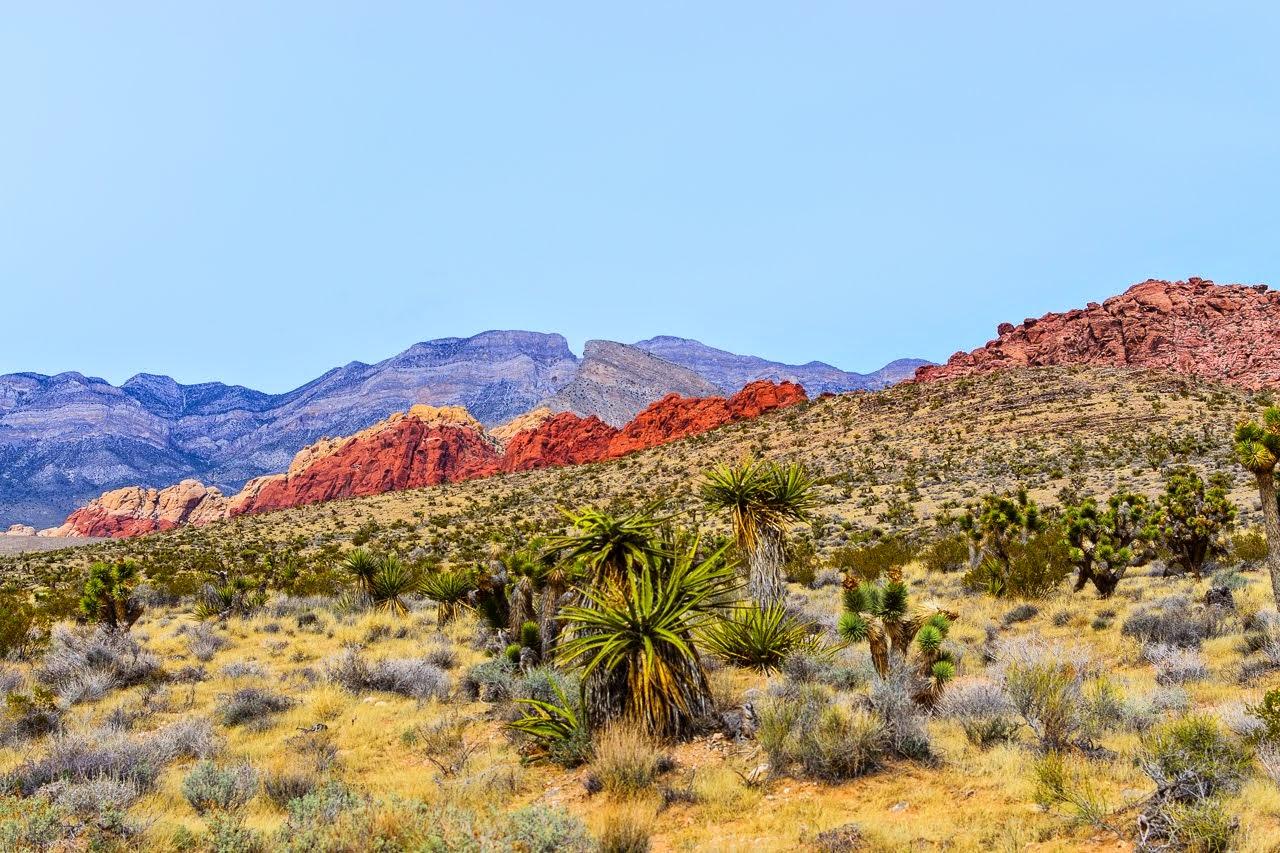 Calico Trail