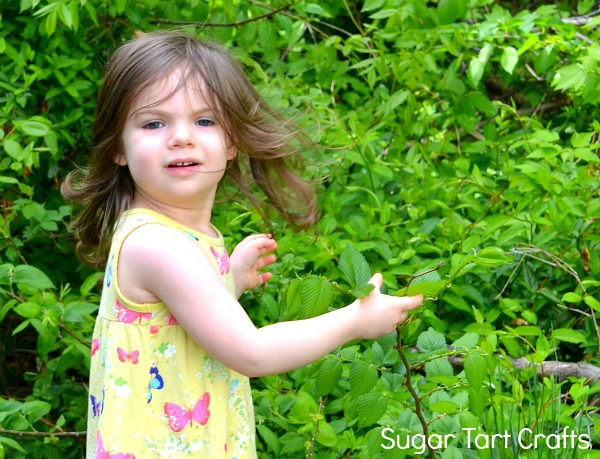 Toddler girl playing with shrubs