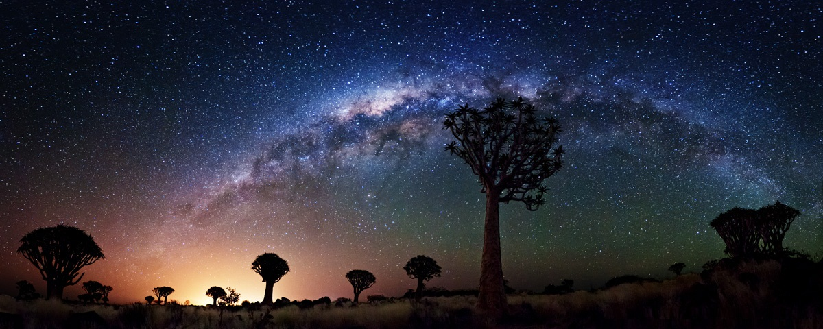 Milky Way Galaxy Quiver Tree Forest
