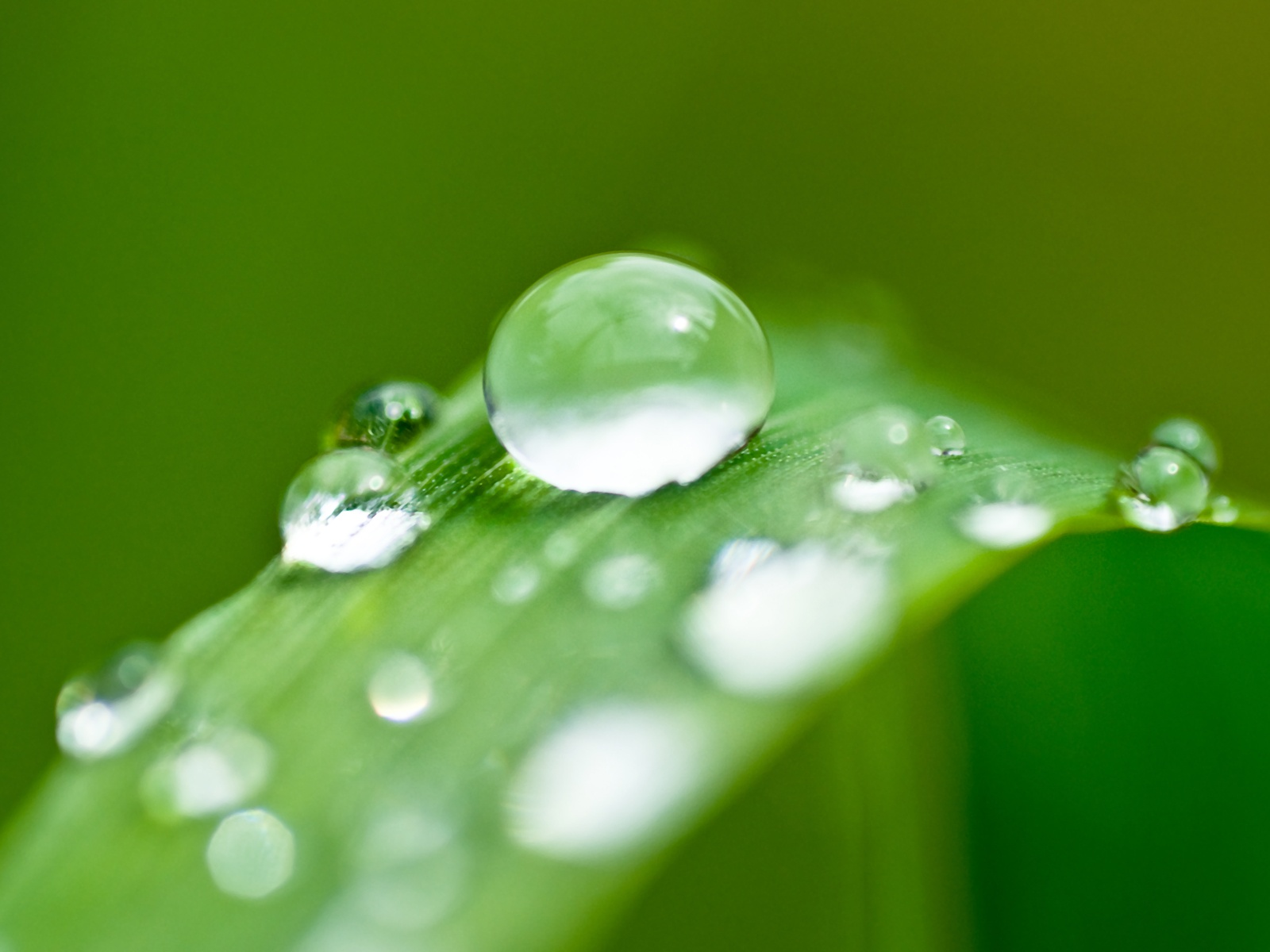 wallpapers planet water drops on leaf wallpapers