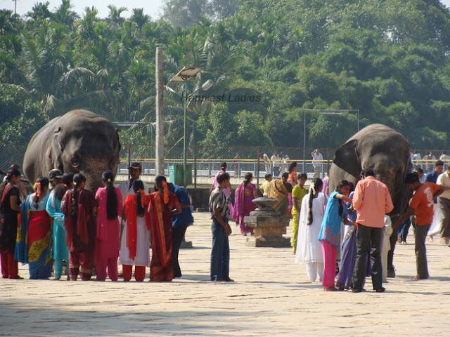Sringeri Sharada Peetham Temple Elephants+sringeri to