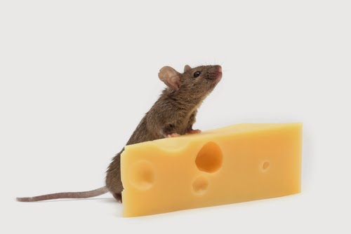 Cheese Gives Birth to Mice