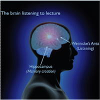 whole brain teaching, does whole brain teaching work