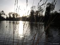 Fond d'écran décembre 2011 - Contre-jour sur le lac du bois de Boulogne