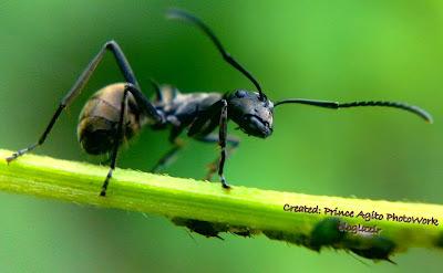 serangga-macro-bening-bloglazir.blogspot.com