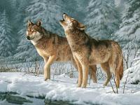 Kisah 2 Ekor Serigala
