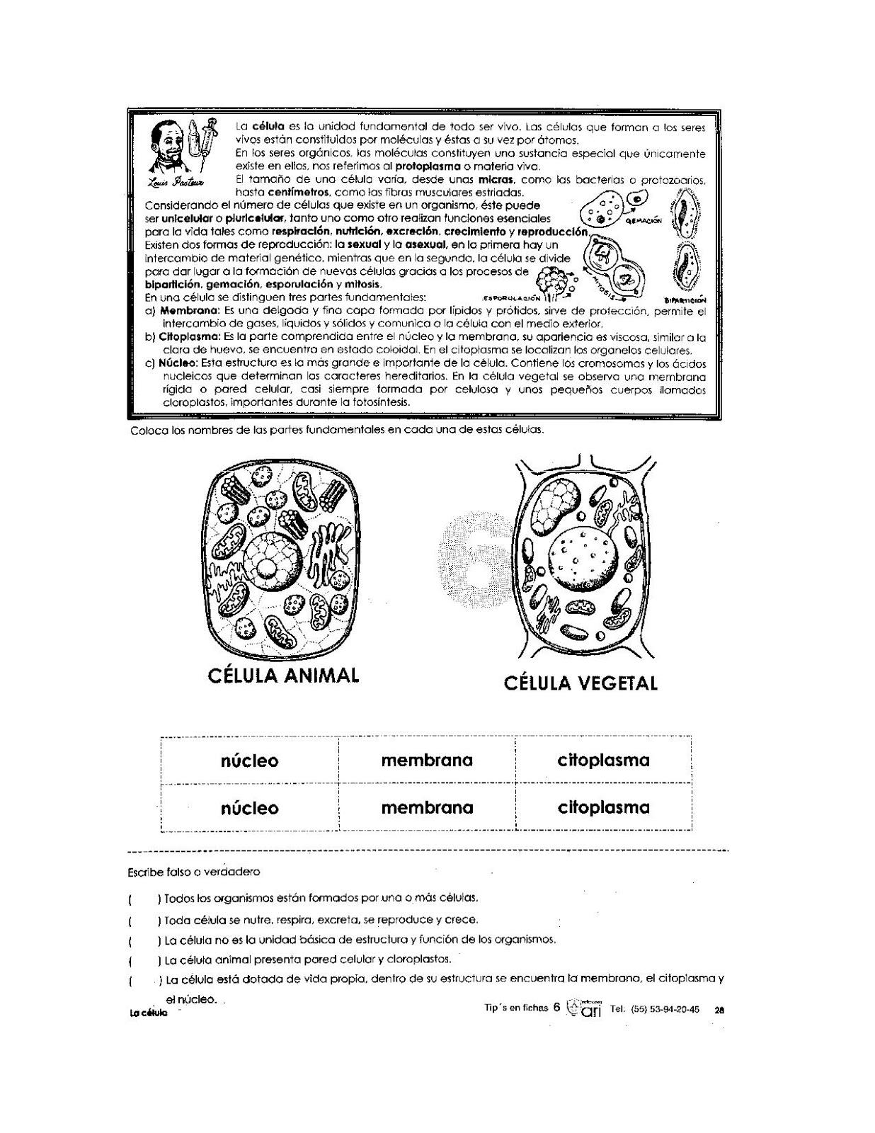 Partes de la célula para niños