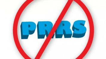 Loại bỏ bệnh PRRS ra khỏi trang trại.