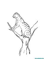 Mewarnai Gambar Jaguar Duduk Diatas Pohon
