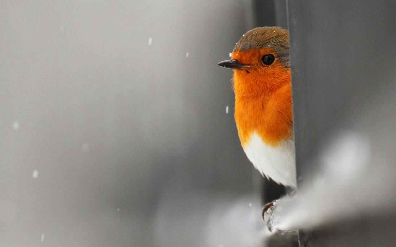 images hd alone love bird hd wallpaper