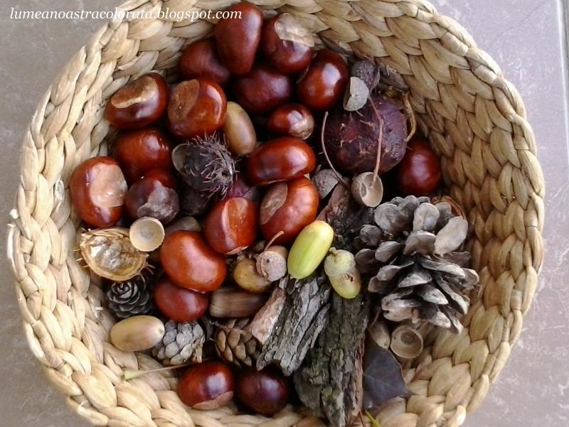 castane, conuri, ghinde si crenguțe pentru colecția noastră