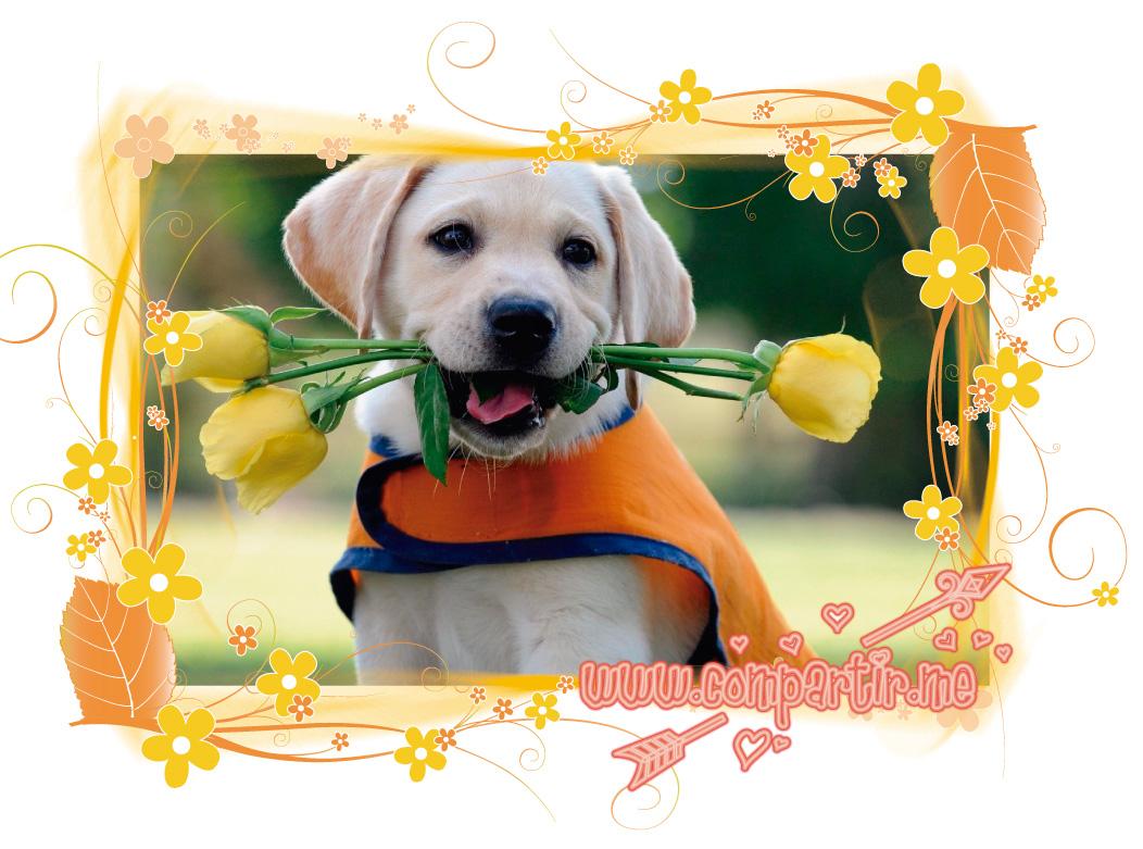 BUENOS DIAS con imagenes bonitas de perrito con rosas