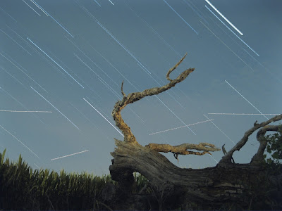 dead tree and night sky