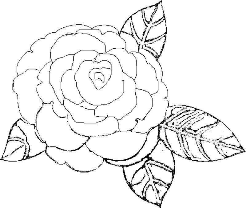 Dibujos para Colorear de la Primavera - Actividades