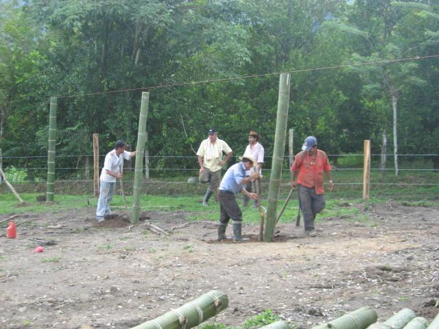 Jovenes rurales emprendedores vivero producci n de for Produccion de plantas en vivero pdf