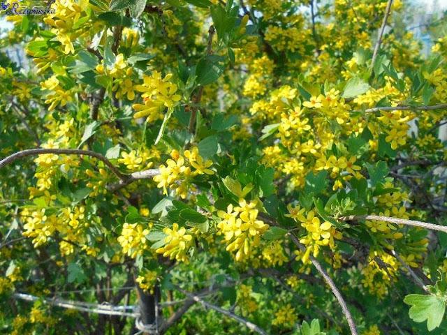 цветы йошты