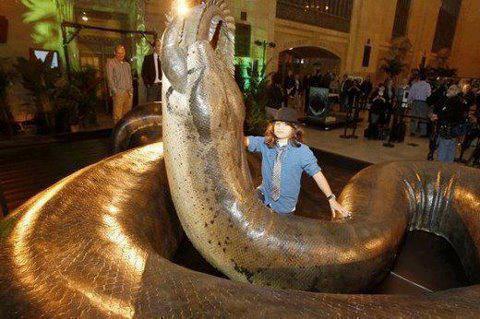 Inilah ular terbesar di dunia apa kabar dunia seandainya ular ini masih ada dan berkeliaran di muka bumi mungkin makanannya bisa saja seekor gajah dewasa ular itu diperkirakan mempunyai tubuh sepanjang reheart Image collections