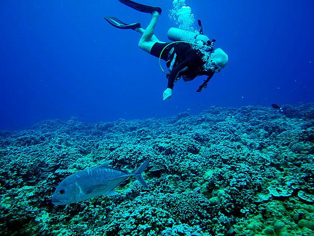 lahaina diving