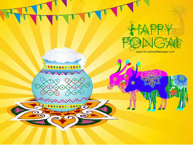 Pongal Still,Photo,Image,Wallpaper,Picture