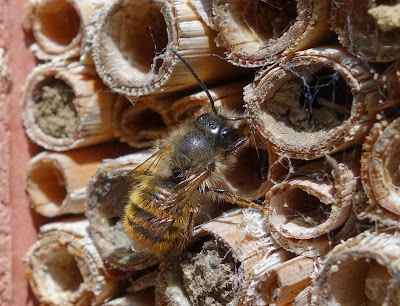 how to help bees in your garden
