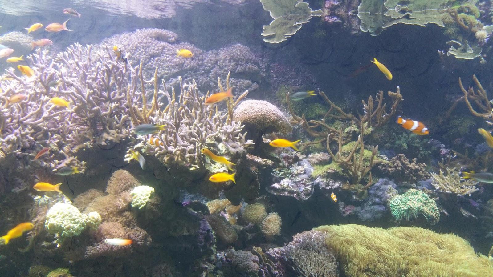 Disegni di fondali marini awesome alghe stelle pesce