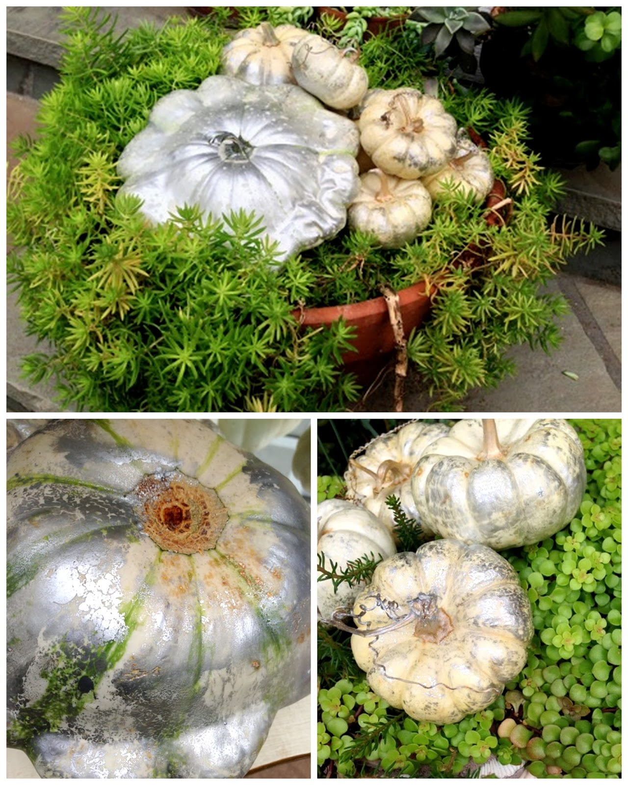 Marblize Pumpkins for the Holidays 3