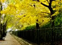 Beauty of Autumn @ Central Park with Hans Zimmer