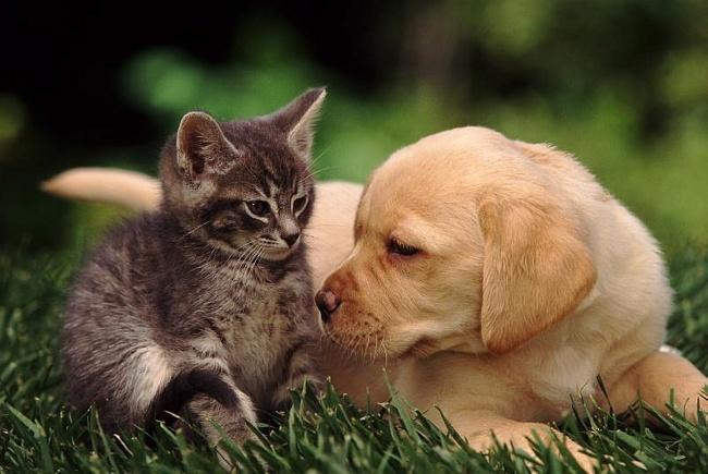 фото, кошки, собаки, фотографии, как кошка с собакой